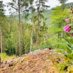 Impressionen aus dem Hürtgenwald